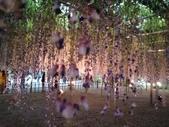 足利紫藤花園:IMG20190511183007.jpg