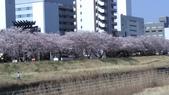 茨城櫻花:IMAG2422.jpg