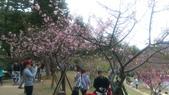 sakura:IMAG0771.jpg