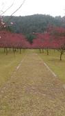 sakura:IMAG0765.jpg
