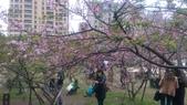 sakura:IMAG0778.jpg