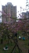 sakura:IMAG0779.jpg
