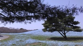 茨城櫻花:IMAG2447.jpg