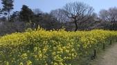 茨城櫻花:IMAG2458.jpg