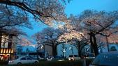 茨城櫻花:IMAG2495.jpg