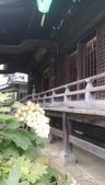 東京紫陽花:IMAG1455.jpg