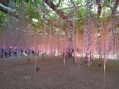 足利紫藤花園:IMG20190511181945.jpg