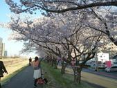 茨城櫻花:P1070763.JPG