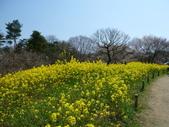 茨城櫻花:P1070812.JPG