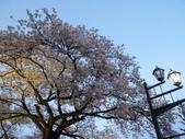 茨城櫻花:P1070840.JPG