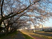 茨城櫻花:P1070775.JPG