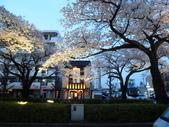 茨城櫻花:P1070839.JPG