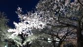 茨城櫻花:IMAG2502.jpg