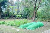 莊嚴聖境:圓覺道場的菜園.JPG