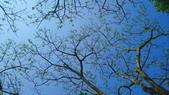莊嚴聖境:印度紫檀.jpg