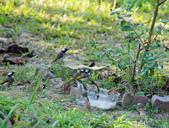 亞類菩薩:25580101福慧世界鳥菩薩享用午餐_1.jpg