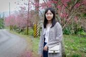 110年2月14日【花蓮】探訪樹湖櫻花:_1070063.jpg