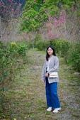 110年2月14日【花蓮】探訪樹湖櫻花:_1070053.jpg