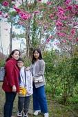 110年2月14日【花蓮】探訪樹湖櫻花:_1070062.jpg