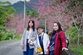 110年2月14日【花蓮】探訪樹湖櫻花:_1070068.jpg