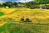 110年9月5日【花蓮】二度造訪六十石山:_1070317.jpg
