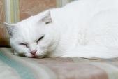 108年11月18~19日【花蓮】黑糖&麻糬可愛寫真:_1060070.jpg