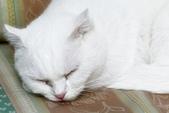 108年11月18~19日【花蓮】黑糖&麻糬可愛寫真:_1060069.jpg