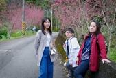 110年2月14日【花蓮】探訪樹湖櫻花:_1070066.jpg