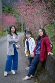 110年2月14日【花蓮】探訪樹湖櫻花:_1070067.jpg