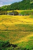 110年9月5日【花蓮】二度造訪六十石山:_1070318.jpg