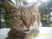 My lovely cats:PIC_0488.JPG