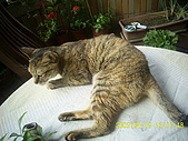 My lovely cats:PIC_0497.JPG