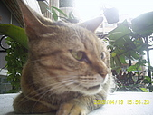 My lovely cats:PIC_0489.JPG