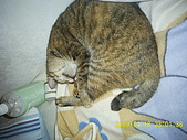 My lovely cats:PIC_0486.JPG