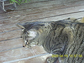 My lovely cats:PIC_0492.JPG