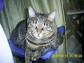 My lovely cats:PIC_0499.JPG