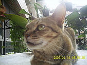 My lovely cats:PIC_0490.JPG