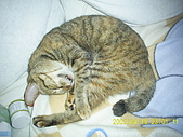 My lovely cats:PIC_0485.JPG