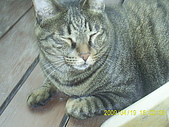 My lovely cats:PIC_0498.JPG