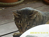 My lovely cats:PIC_0496.JPG