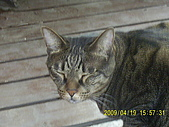 My lovely cats:PIC_0491.JPG