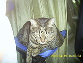 My lovely cats:PIC_0500.JPG