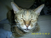 My lovely cats:PIC_0484.JPG