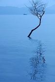 攝影:水中樹影