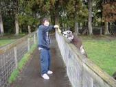 紐西蘭遊(04):1094106771.jpg