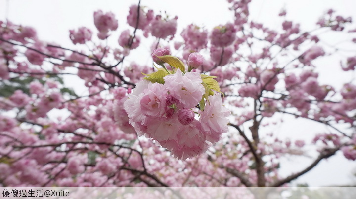 旅遊萬花筒的相簿:金澤B-03.jpg