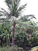 Bali:1000407峇里島Kuta Paradiso飯店早餐餐廳外.jpg