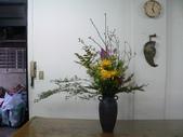 瓶花----多種插:P1430383 (800x600).jpg