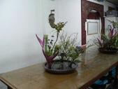 輕鬆的寫景花:P1430317 (800x600).jpg