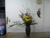 瓶花----多種插:P1430391 (800x600).jpg